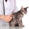 Ветеринарные клиники в Великодворском